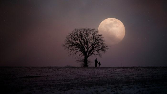 winter-2945906.jpg