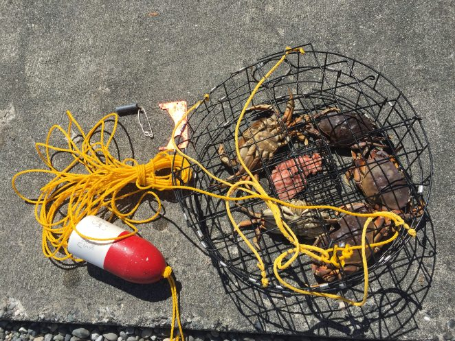 Here is my crabbing gear: pot, bait box, line, buoy, weight and measuring guide