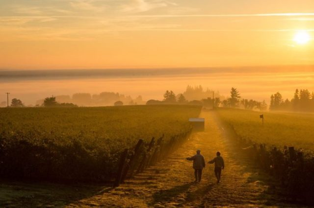Brooks Vineyards Photo Credit Brooks Wine