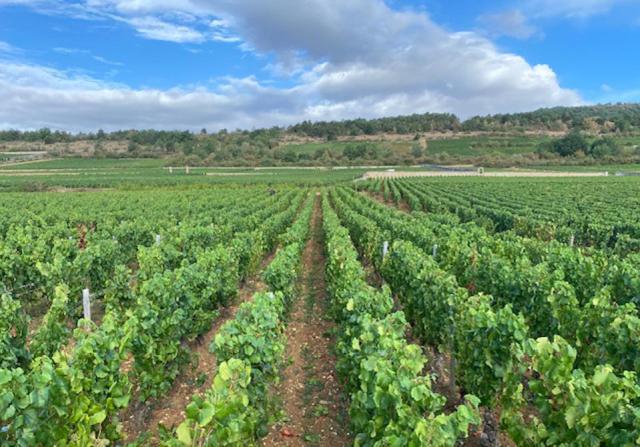 2020 harvest in Burgundy DOMAINE DU CELLIER AUX MOINES