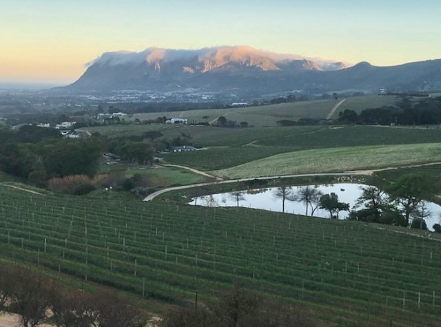 View of Table Mountain from the vineyards of Constantia (Photo credit: Kelli White)