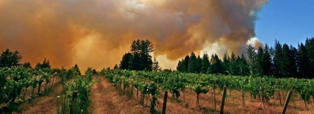 © ETS | Smoke taint is a clear and present danger on the West Coast.