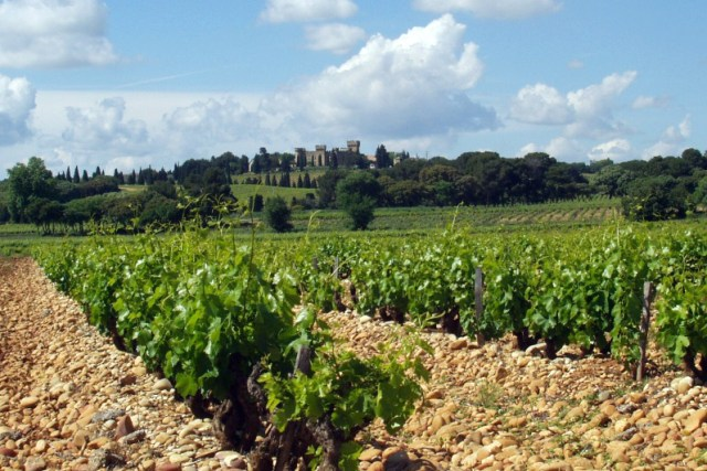 Vineyard with the Châteauneuf-du-Pape appellation borders, with vines trimmed as bushvines. Philipp Hertzog
