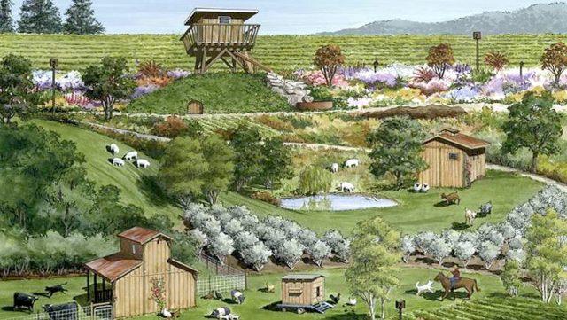 Paul Dolan's 160 acre certified biodynamic Dark Horse Ranch in Mendocino County is up for Regenerative Organics Certification this year. Illustration courtesy of Truett Hurst.