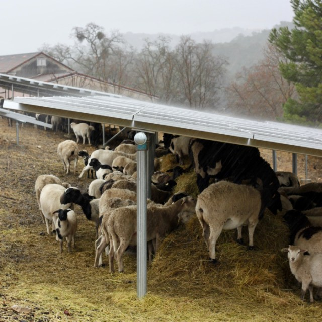 Our flock sheltering under our solar panels during the height of the storm Wednesday: