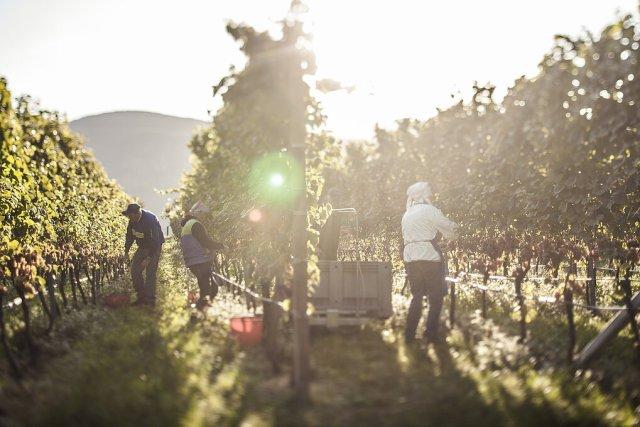 Credit: Florian Andergassen/Sütirol Wein-Vini Alto Adige