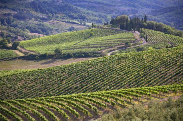 New Chianti Classico subzones, or 'UGAs' / Credit: Consorzio Vino Chianti Classico