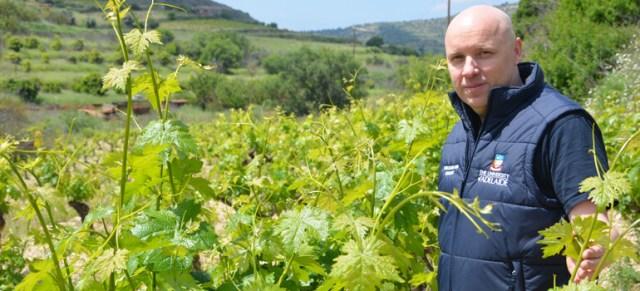 Alexander Copper has been studying Cypriot varieties for use in Australia