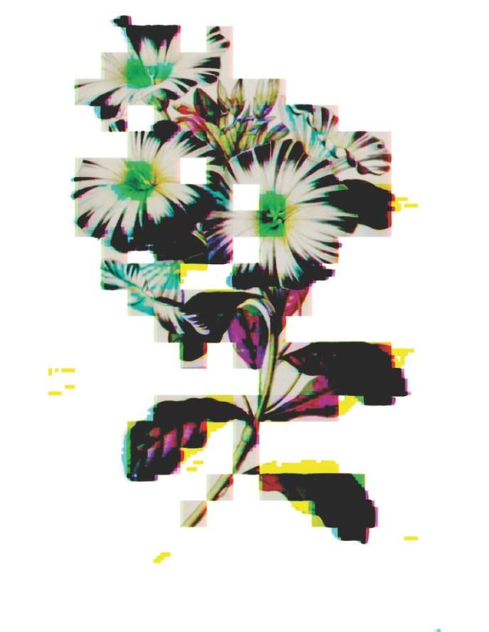 Secret Life of Flowers - Daisy