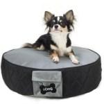 Ozzie modeling shoot for DOG.COM