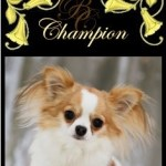 BEST PUPPY IN SHOW CH. Brislins Hollywood Scandal