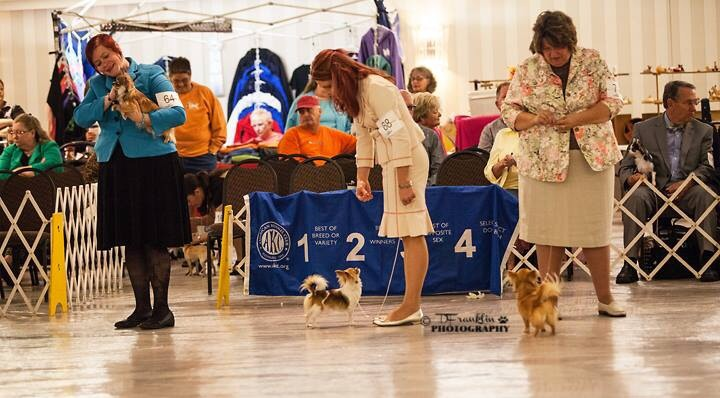 Chihuahua Club of America National Specialty 2014