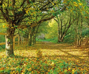 Trees with leaves on the ground in the cotswolds