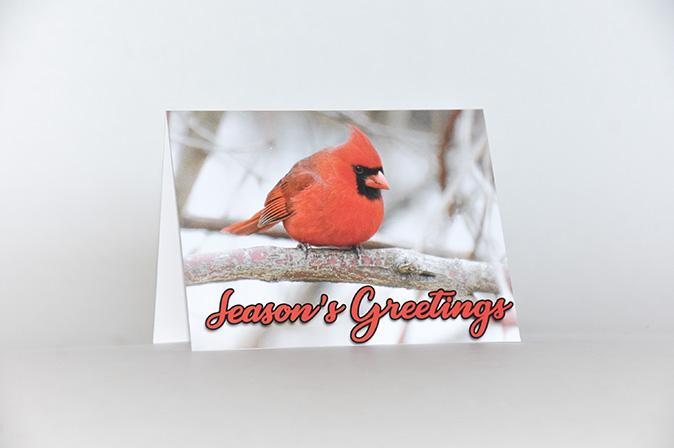 Seasons Greetings Northern Cardinal Greeting Card by BritHikesOntario