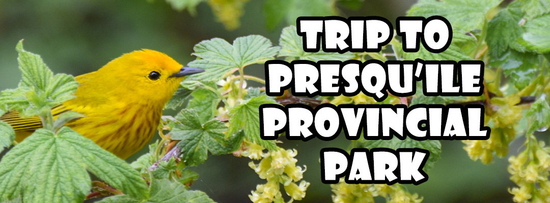 trip to presqu'ile provincial park