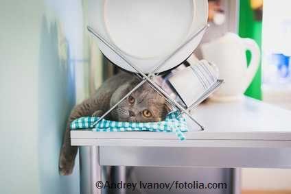 Katze in der Küche