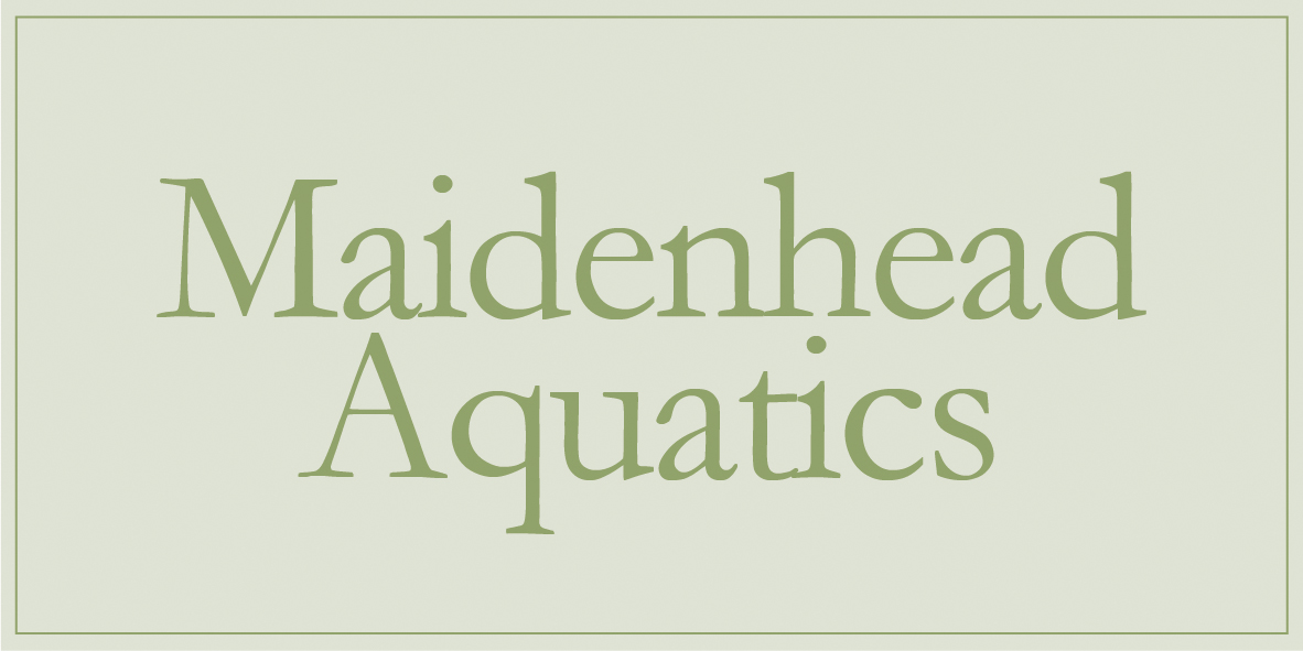 Maindenhead Aquatics