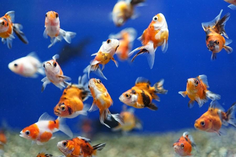 Aquatics at Hornsea Garden Centre