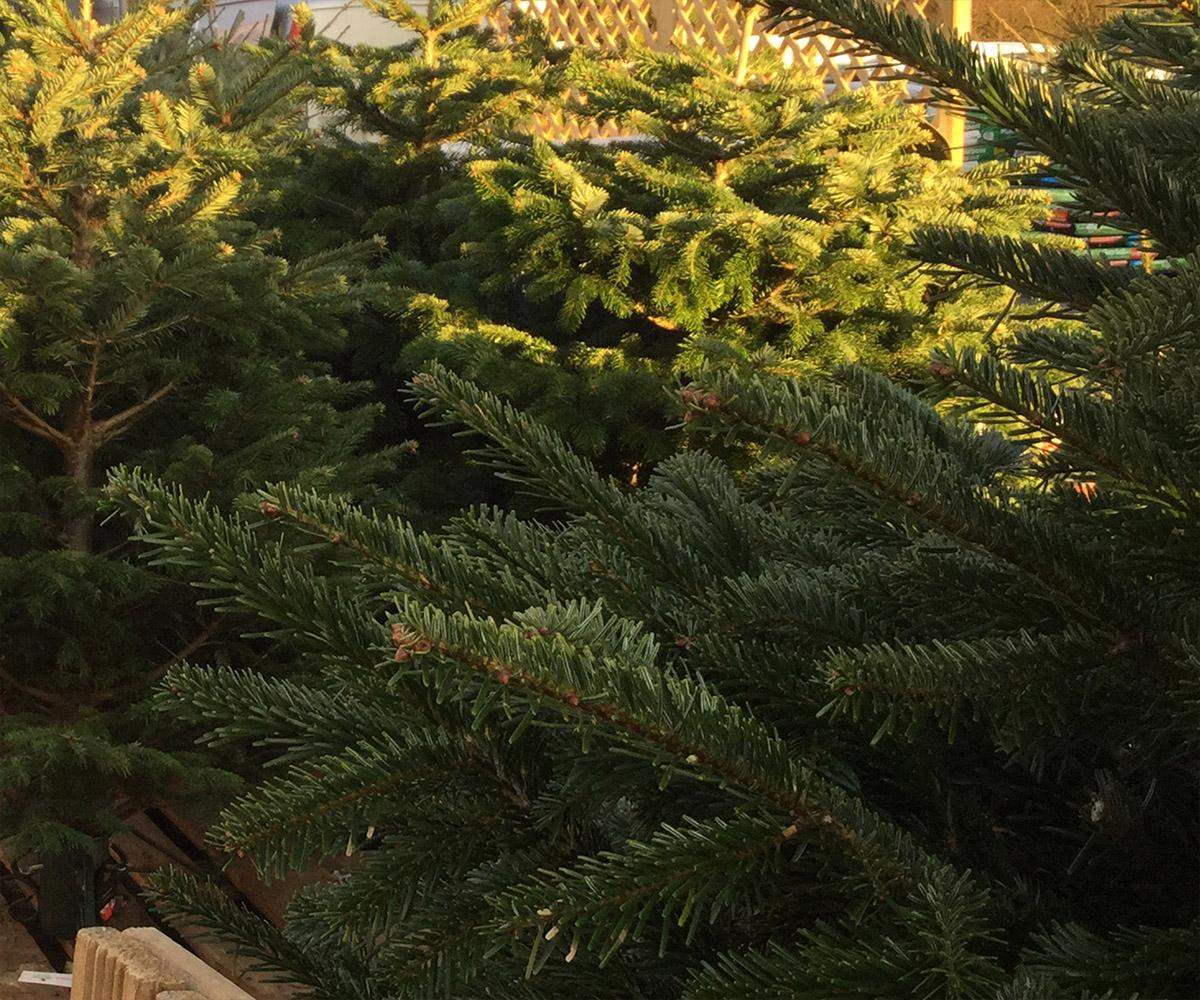 Christmas at British Garden Centres
