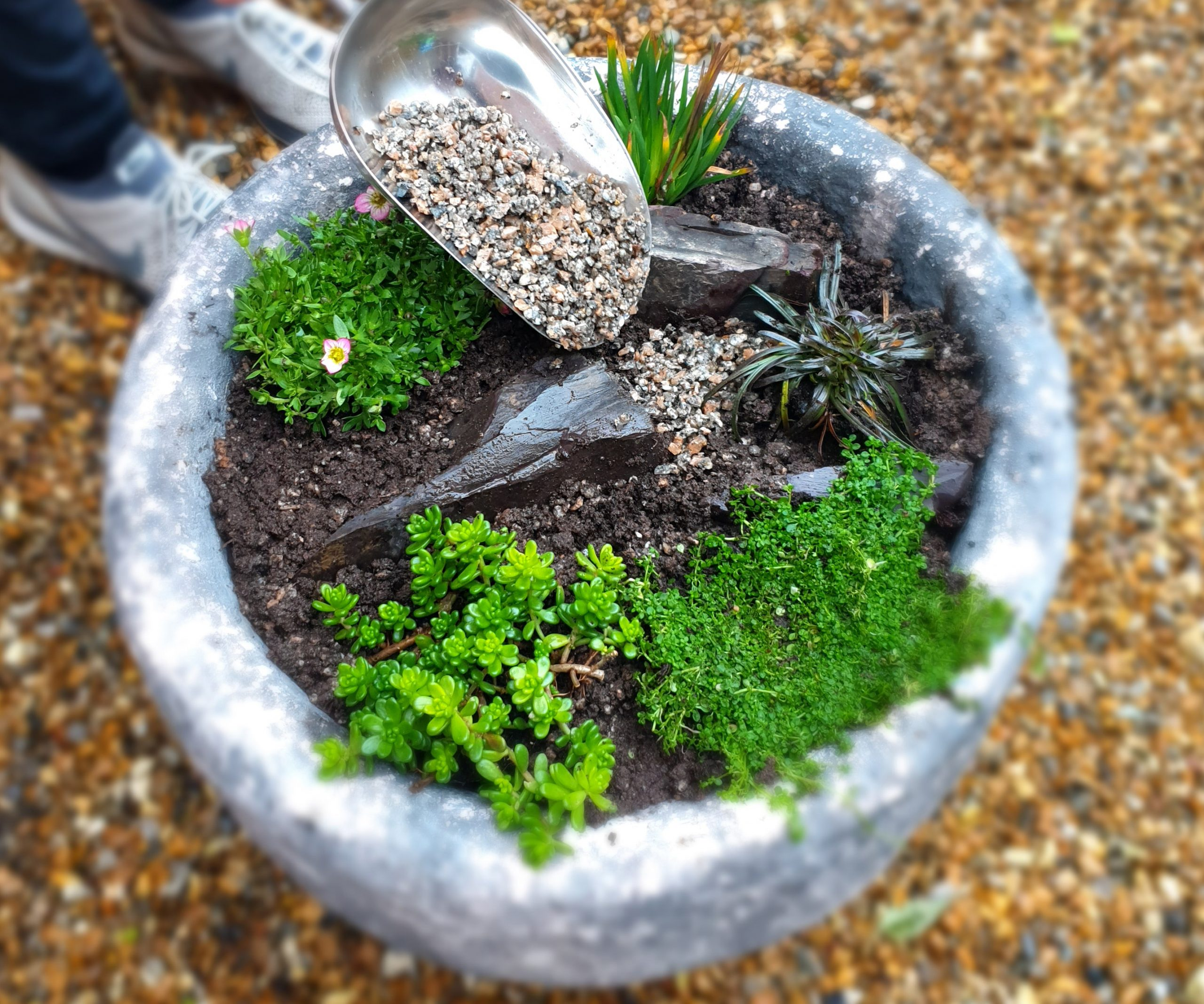 Horti Grit into alpine container