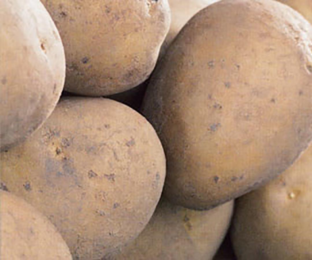 Potatoes - second earlier