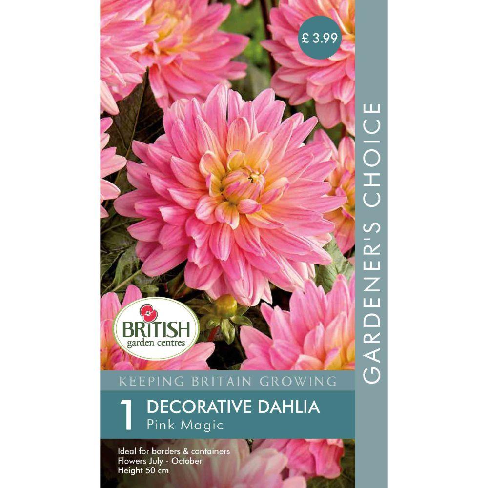 BGC Dahlia Pink Magic