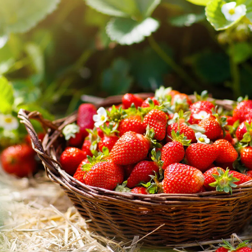 Strawberry seeds and plants