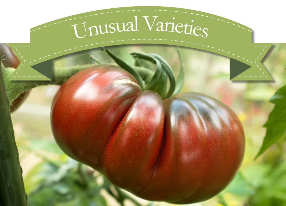 Heritage Vegetables NOW IN