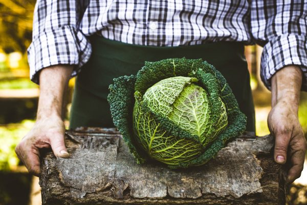 British-Growers_Gallery-Cabbage