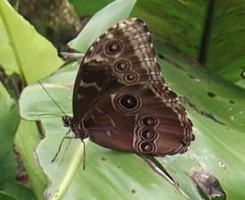 pili palas butterfly house__04052014 (15)