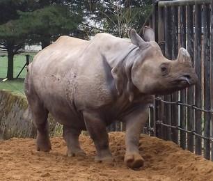 whipsnade zoo_rhino_12032012 (2)