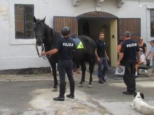 Horse Training Centre 002 1