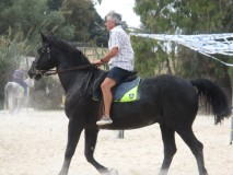 police horse 4