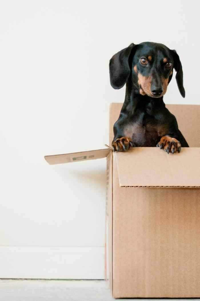 Why Does Moving House Stress Us Out So Much (And Some Things You Can Do About It)