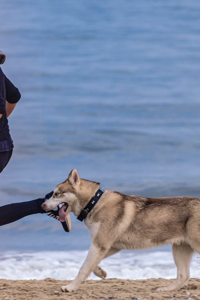 5 Reasons You Should Be Exercising With Your Dog