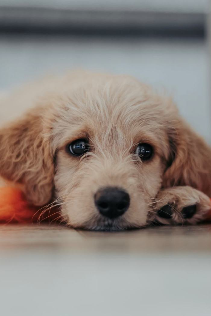 3 Steps For Puppy-Proofing Your Home