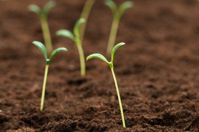 Journey to Joy/Heartstrings: Growth