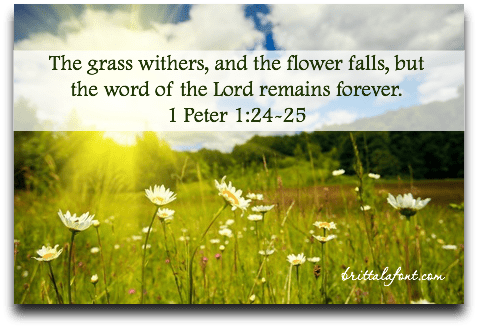 1 Peter 124-25