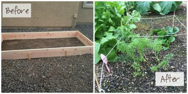 Before&After Garden