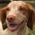 Adopt_Duchess_BRIT_1