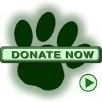 Donate to Britany Rescue in Texas