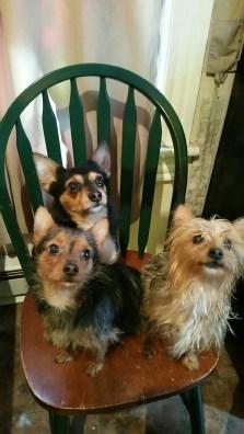 Doggie Family