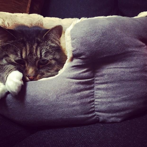 cozy cat