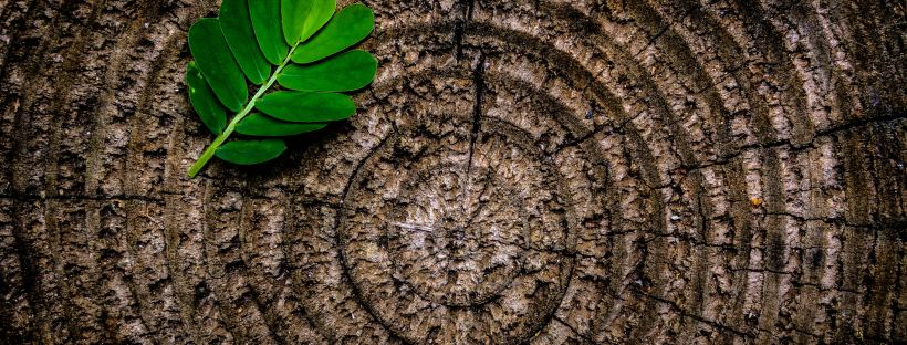 Tree trunk spiral with green leaf by Joey Kyber on Unsplash