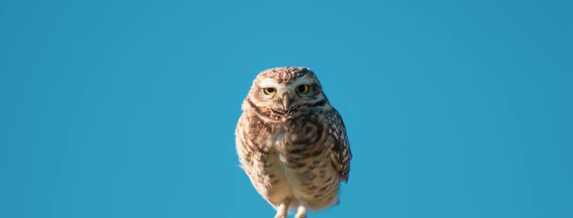 owl on pole with funny look on its face