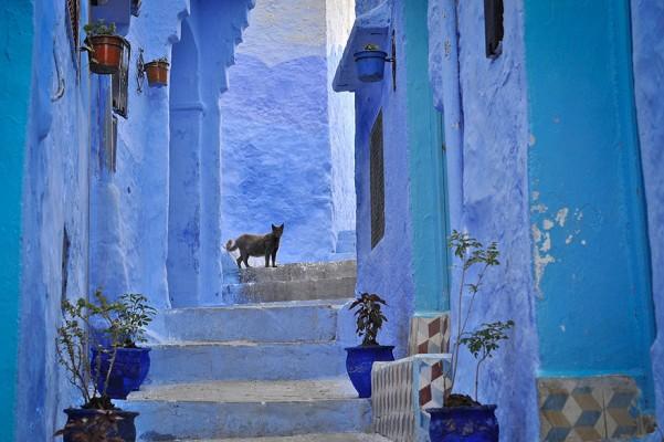 salahmah-Chefchaouen-morocco