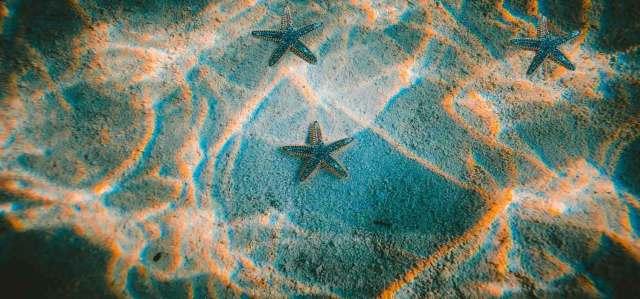 image of brittle starfish