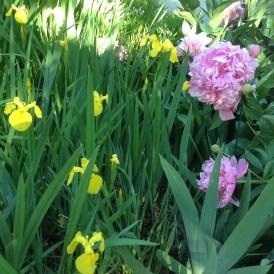 Iris and Peonies 2
