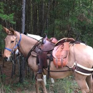 Registration Equestrian Poker Ride