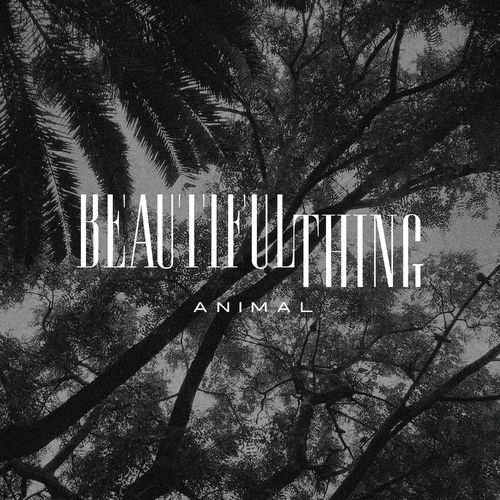 Beautiful Thing – Animal